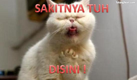 Download 93+  Gambar Kucing Dengan Tulisan Lucu Terbaik